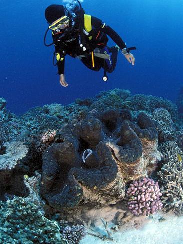 Mandalay Bay  Shark Reef  Animals